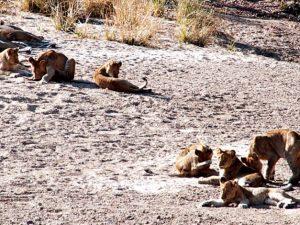 lionslots