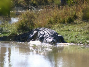 christian-croc